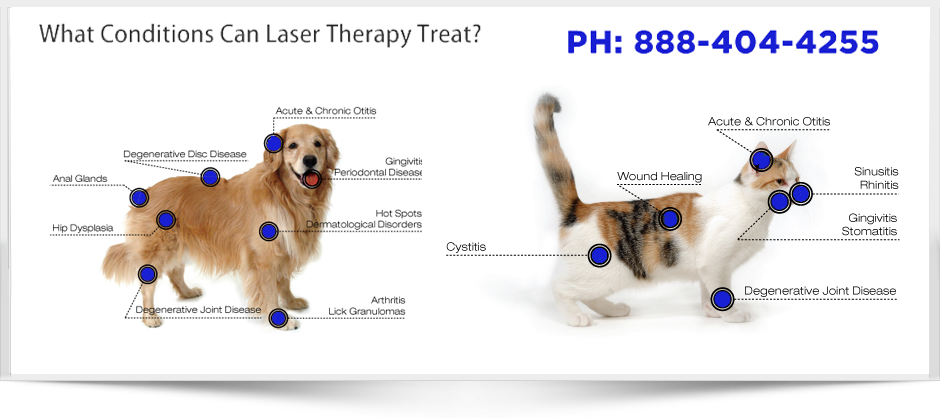 Medx Laser Therapy for Canines and Felines