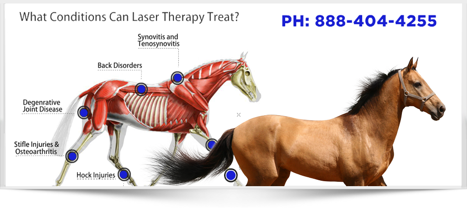 Medx Laser Therapy for Equine and Veterinary